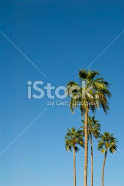 Palm Trees Against a Vibrant Blue Sky